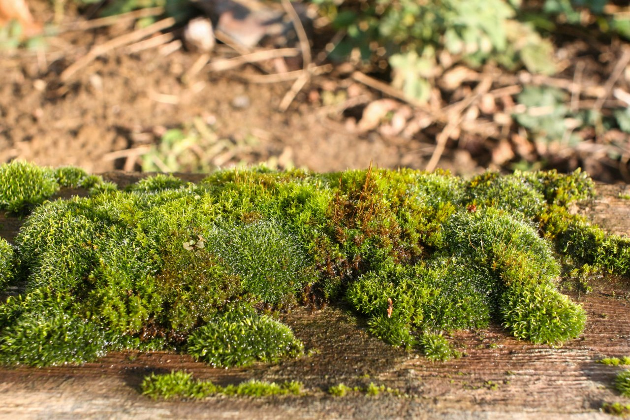 moss forests