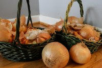 onion skins natural dyeing