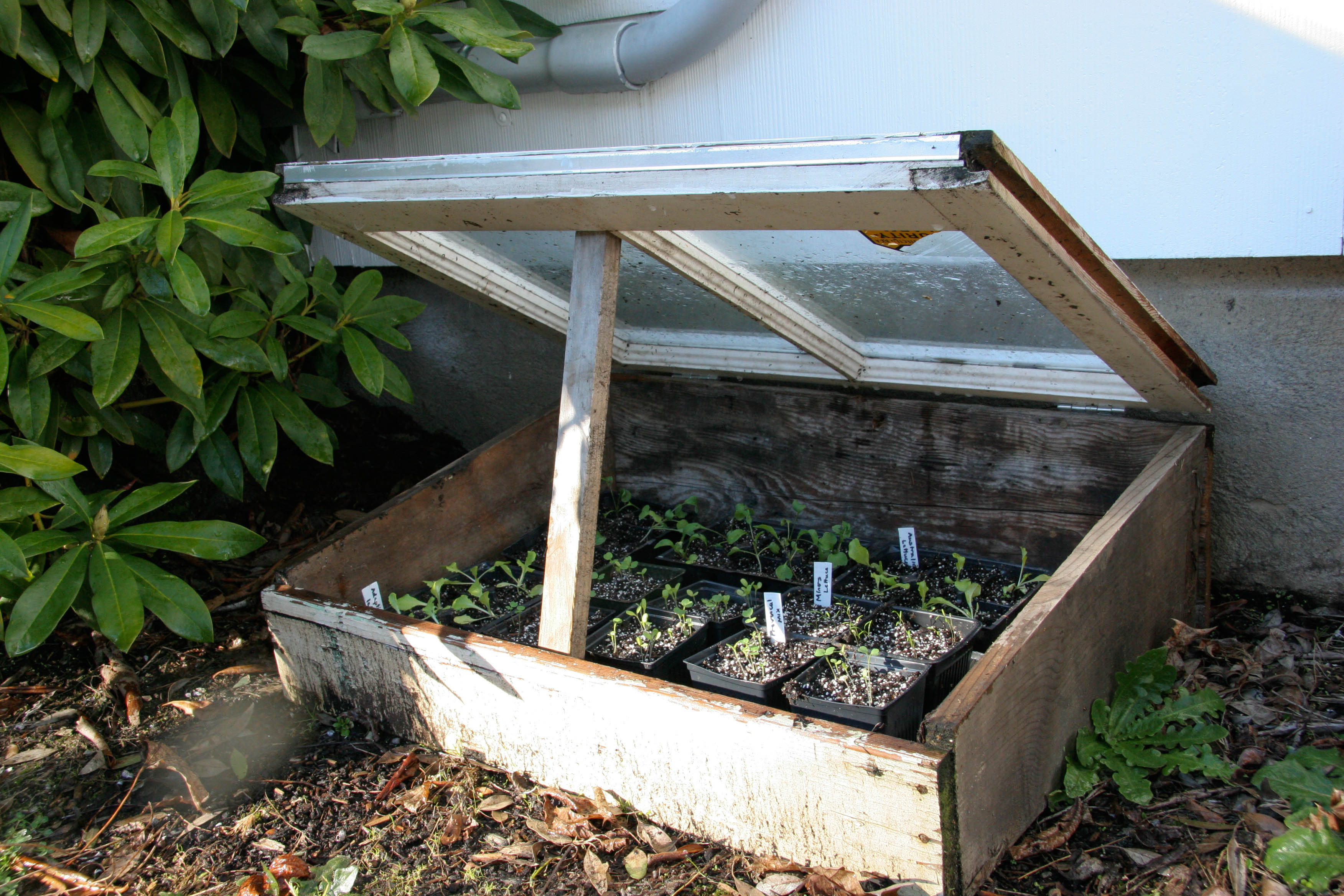 Fantastic Starting Seeds In Cold Frame Collection - Picture Frame ...