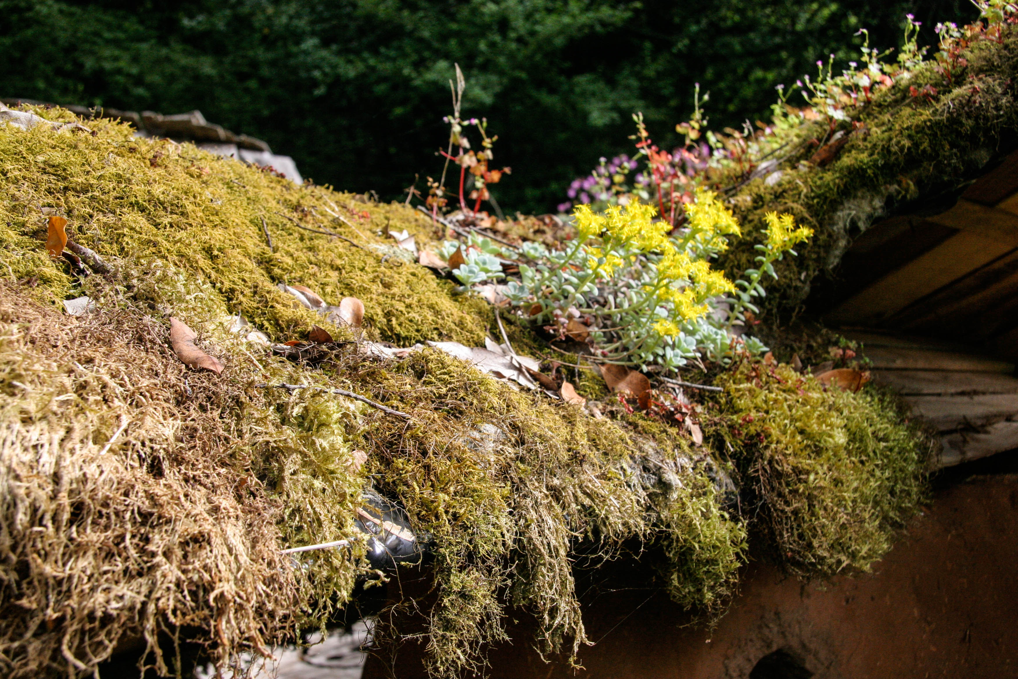 ... Living Roof. Livingroofs