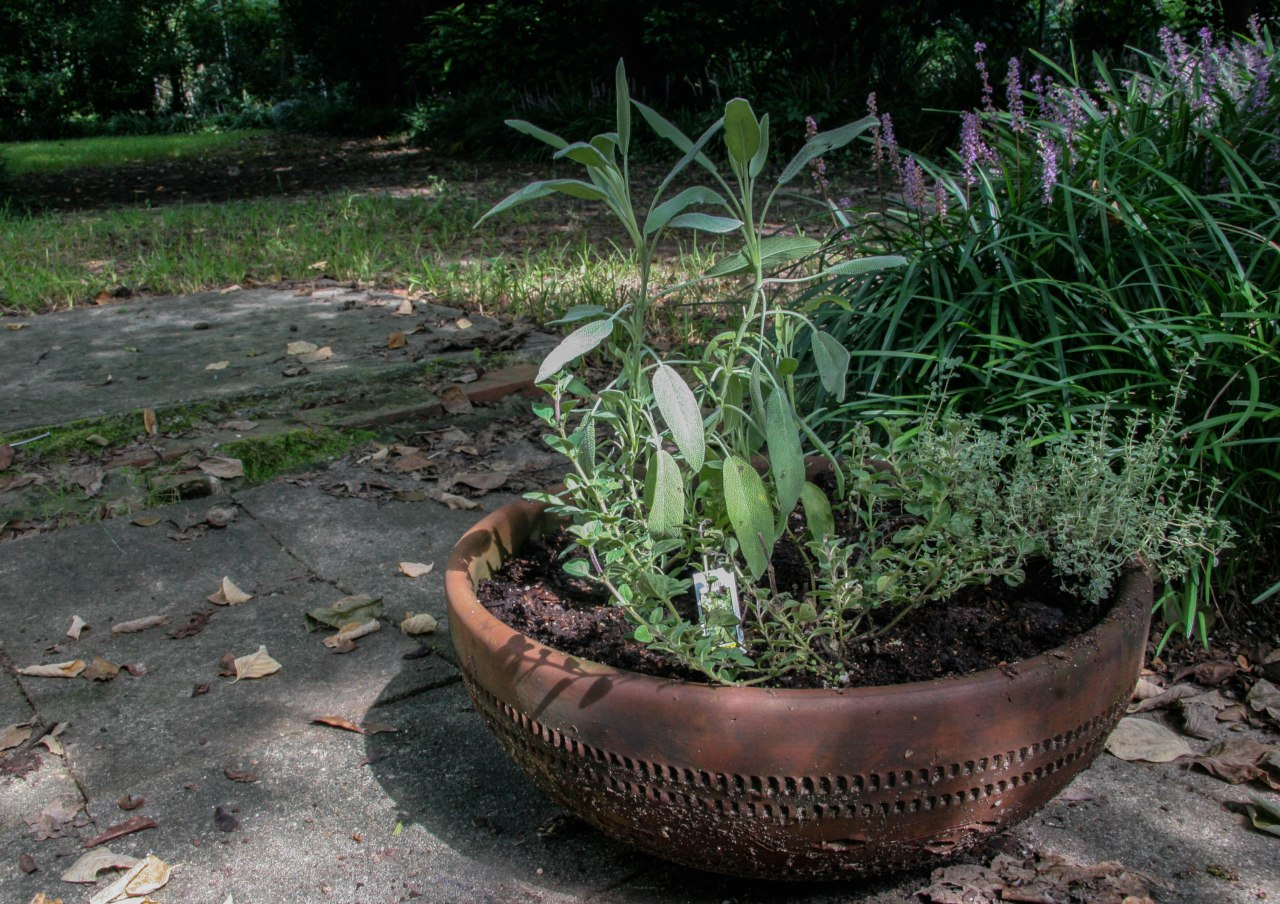 containerplanting-2