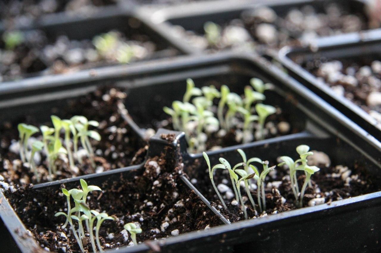 spring seeds-3