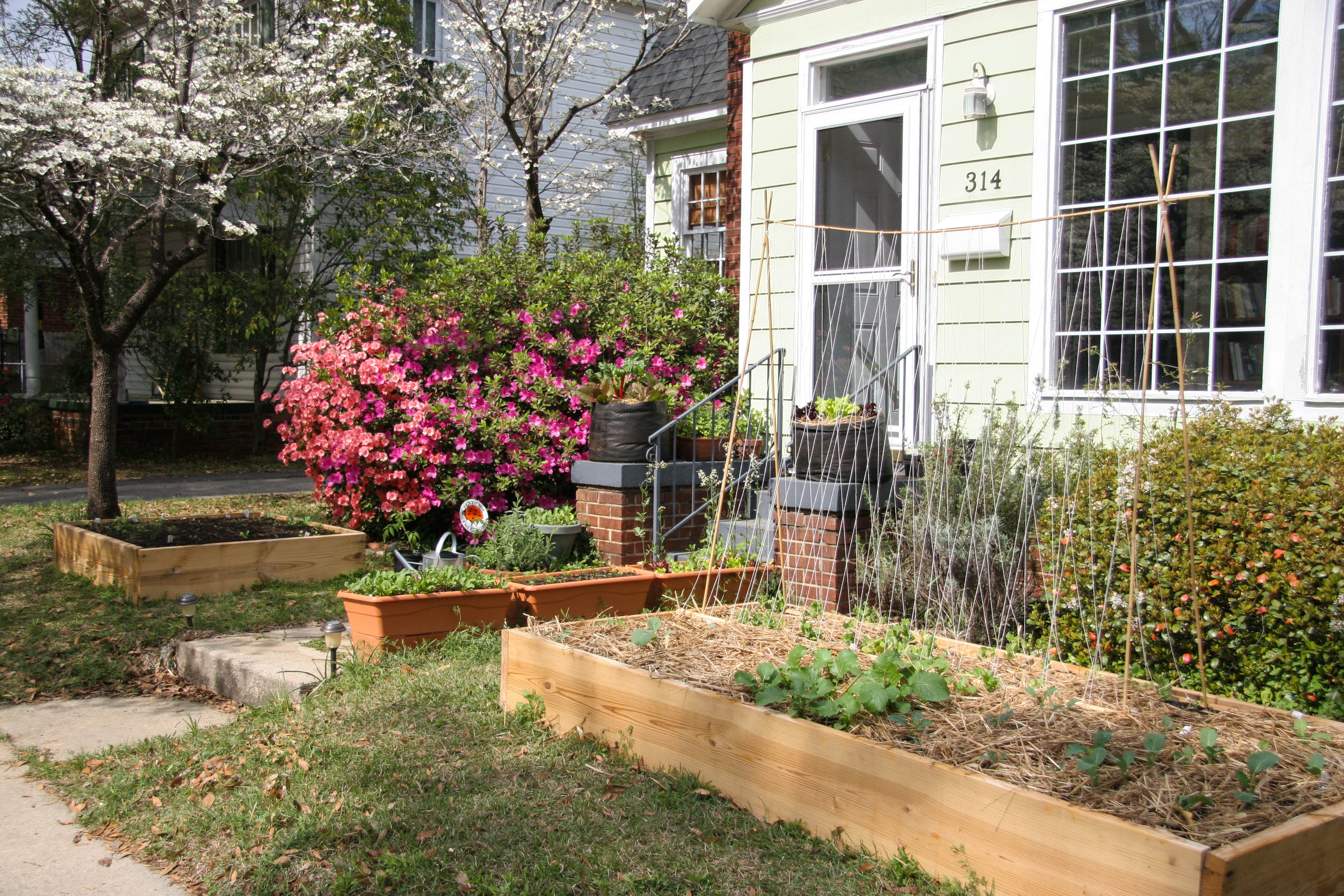 frontyard - Front Yard Garden