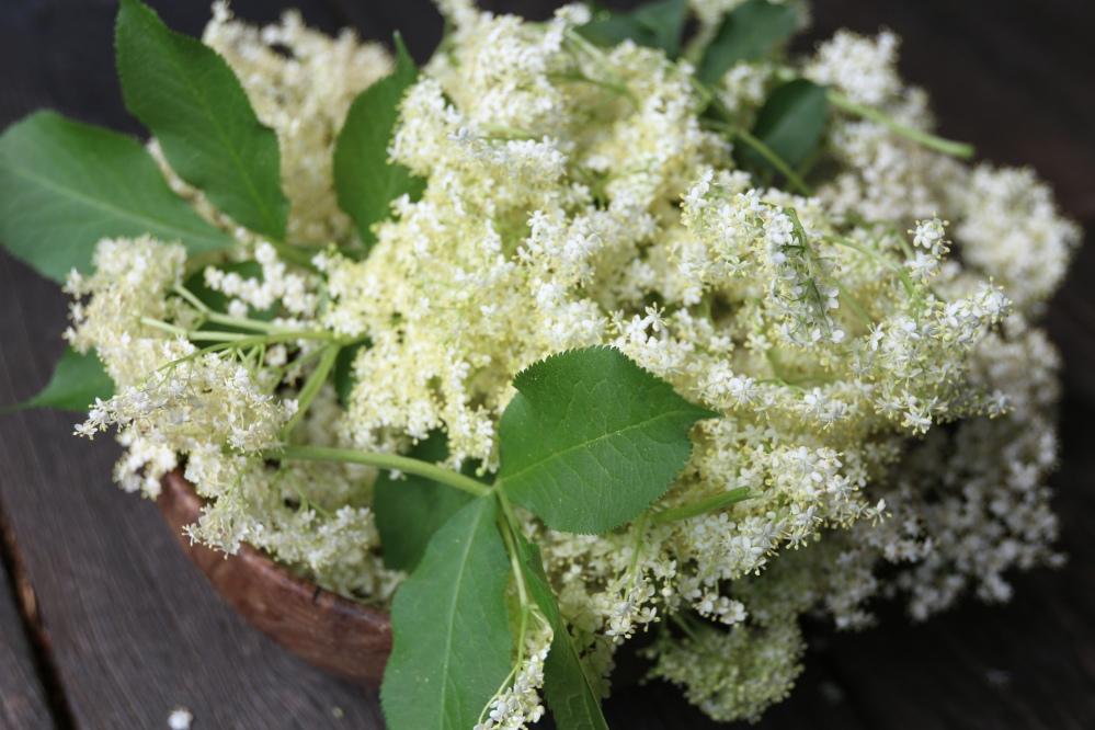 elderflower-2