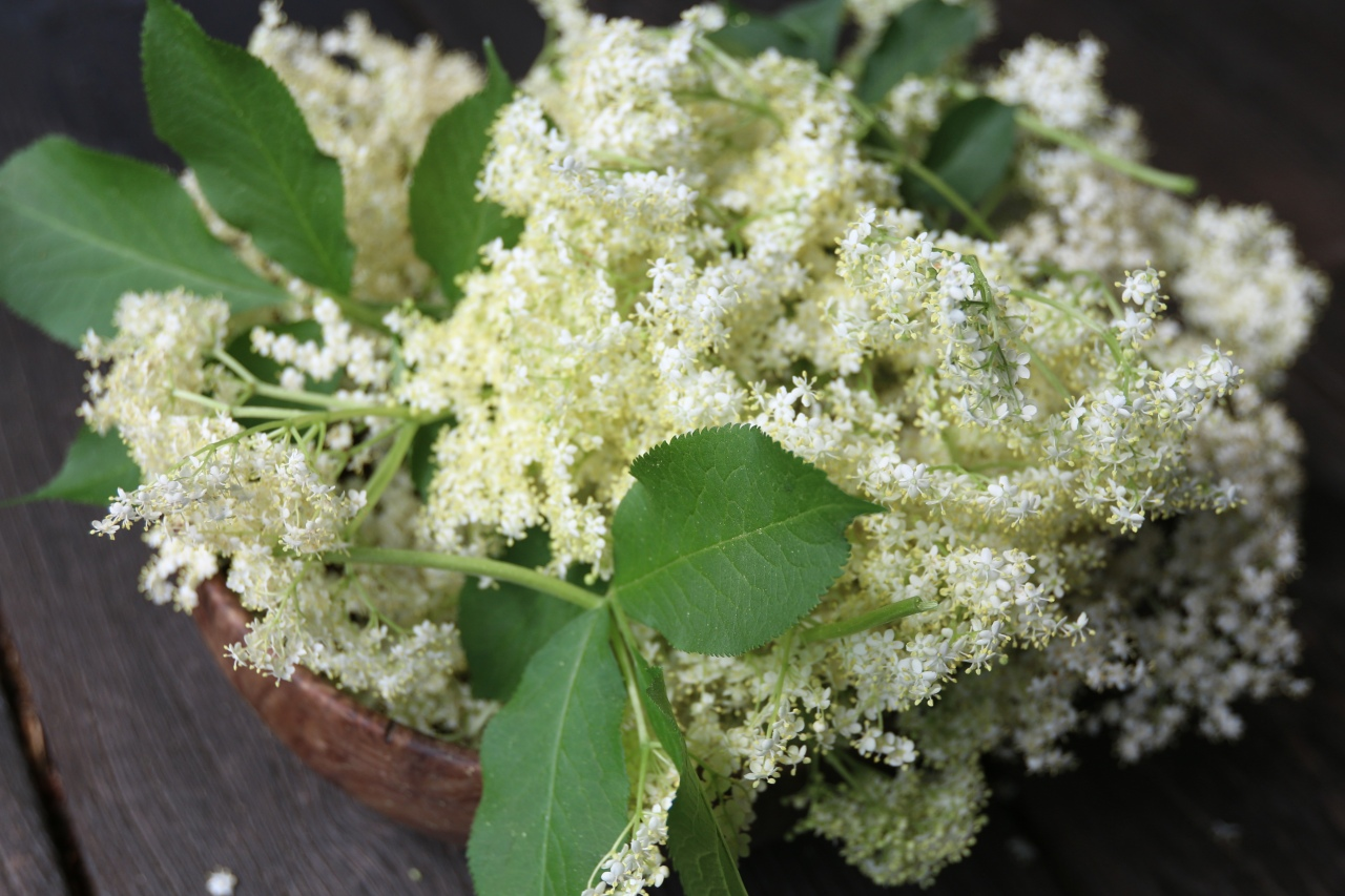 elderflower-2